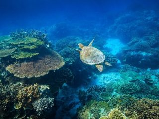 The Great Barrier Reef: dive vs snorkel?