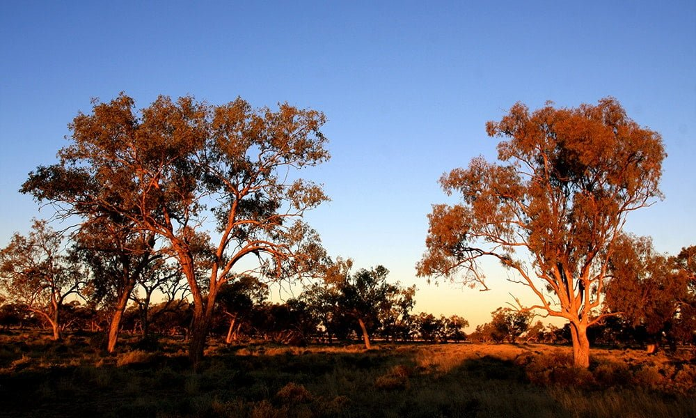 Secrets of the Pilliga Forest