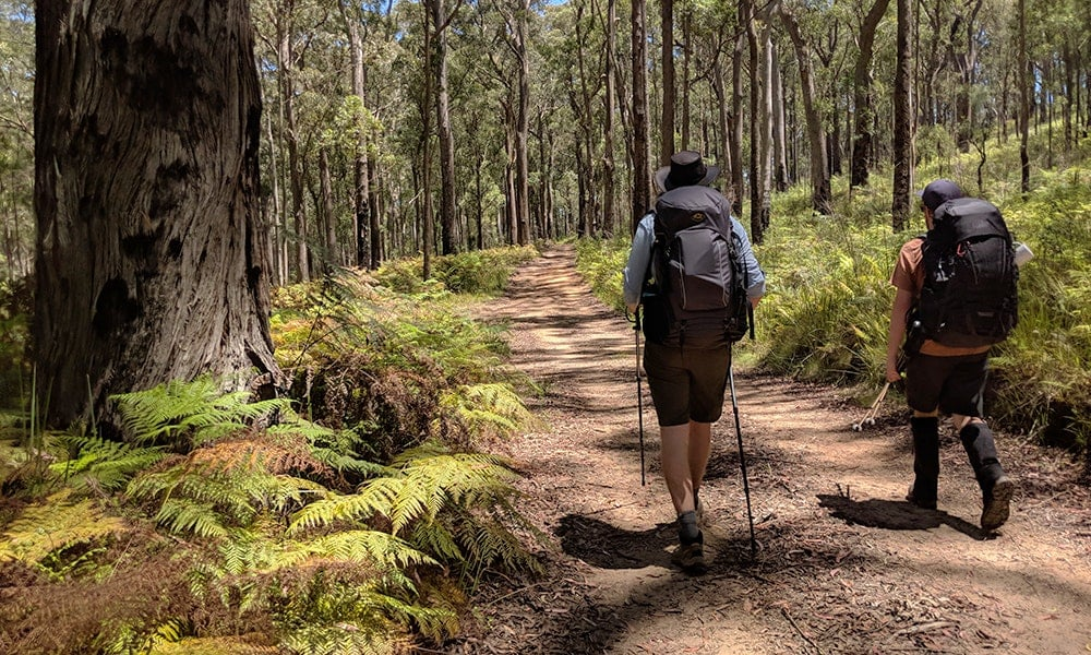 Green Gully Track: bushwalking through history