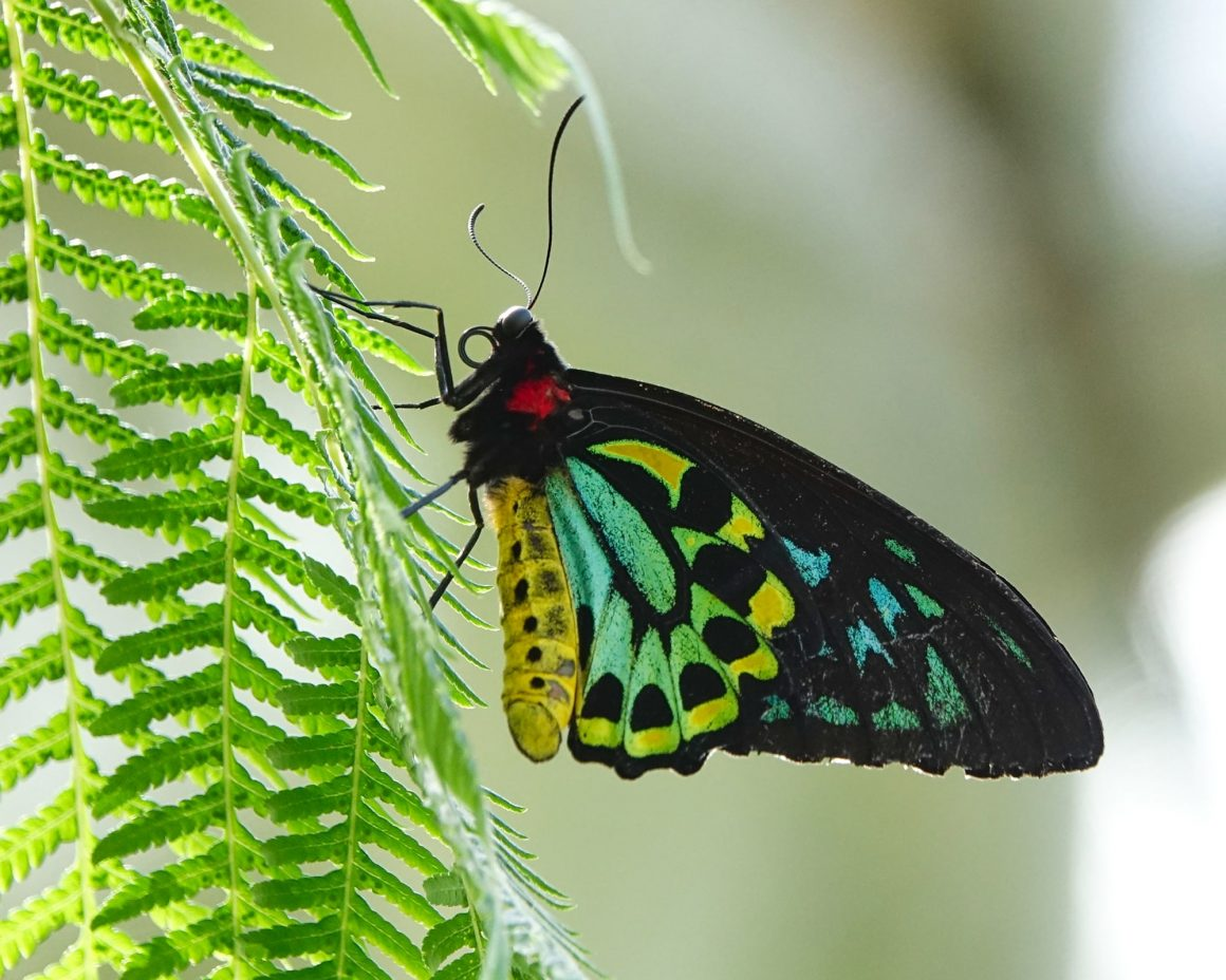 Butterfly sanctuary in the Atherton Tablelands