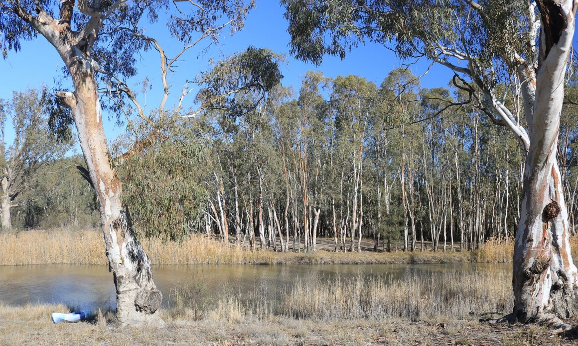 Camping at Overland Corner on the Murray River South Australia